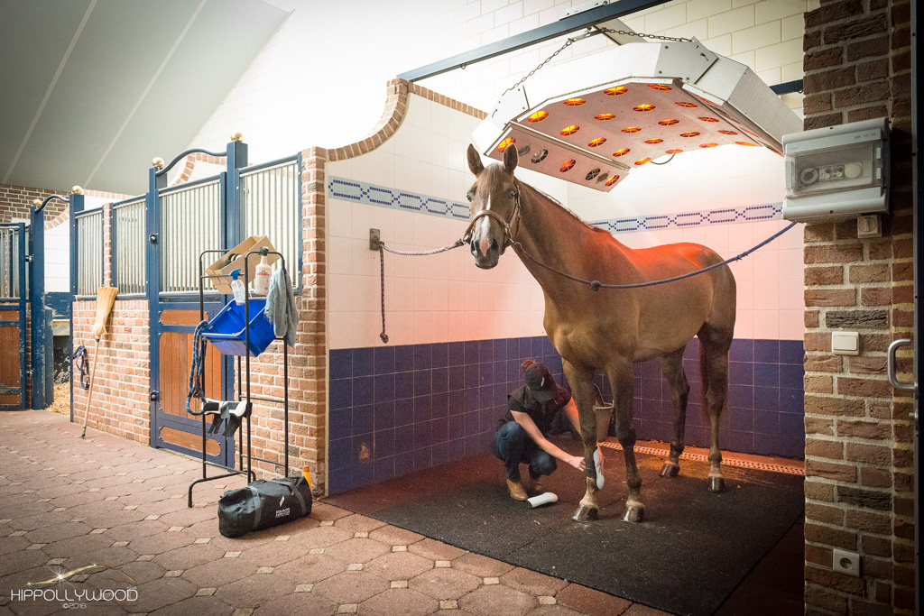 Elkenhof stable treatment Equilog